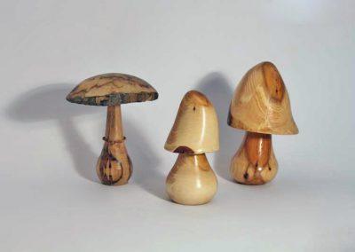Champignons en bois d'érable échauffé et en bois d'if .